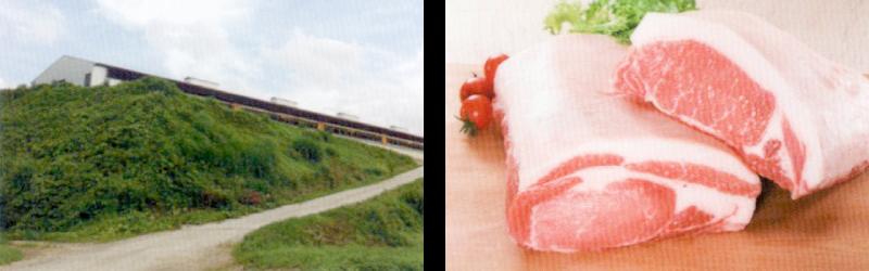 味里の豚肉の品質